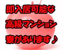 トマトの思い出 新宿店+画像11