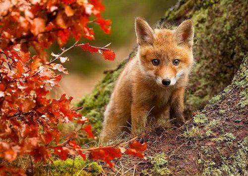 実りの多い秋の画像